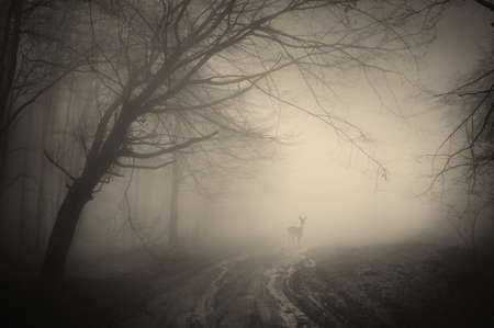 deer in a forest on a rainy day  photo