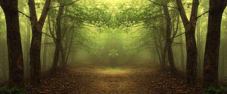 pad door een mysterieuze groene bos