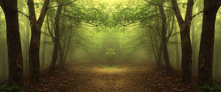 path through a mysterious green forest
