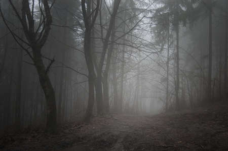 road through a dark grey forest Stock Photo - 13547891