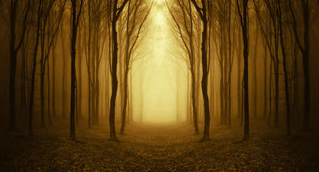 path through a golden forest at sunrise with fog and warm light  Stock Photo