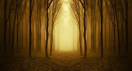 weg door een gouden bos bij zonsopgang met mist en warm licht