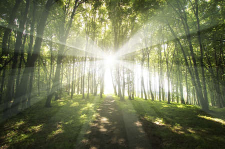 sun rays in a green forest in spring  Stock Photo - 13547950