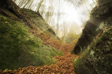 bedrock: sunset in a wild forest with huge cliffs  Stock Photo