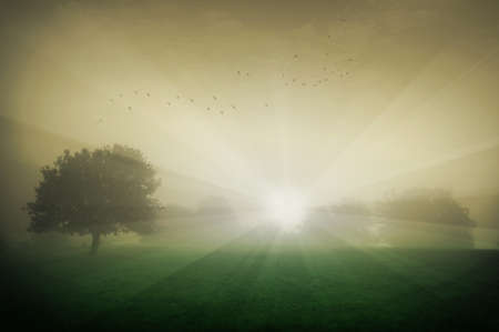 sunrise with trees fog and birds on a summer morning  Stock Photo - 13547848