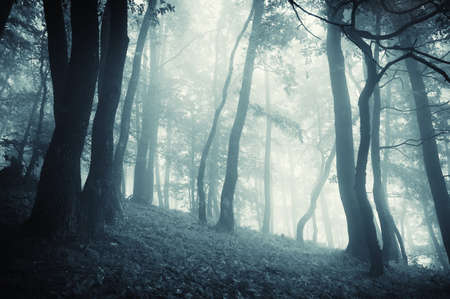 cold forest with fog at evening  photo