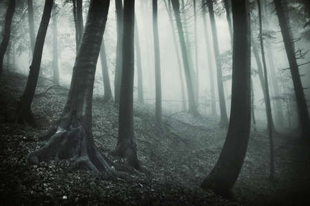 dark landscape from a forest with black trees and fog Stock Photo - 13840822