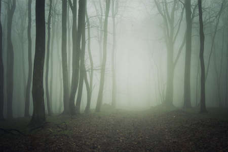 path through a dark forest with fog