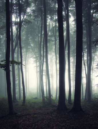 misty forest: vertical photo of a forest at morning  Stock Photo