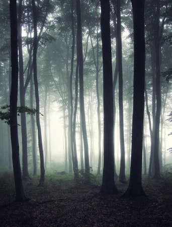 vertikale Foto von einem Wald am Morgen Standard-Bild