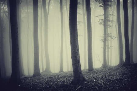 trees in a misty forest photo