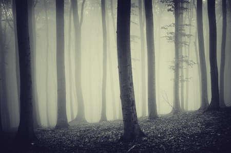 rainy season: trees in a misty forest