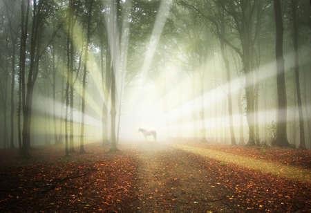wit paard in een magisch bos met zonnestralen en mist tussen de bomen Stockfoto