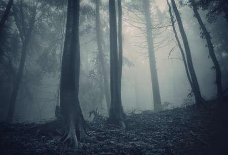 pijnbomen in een donker bos met groene mist Stockfoto