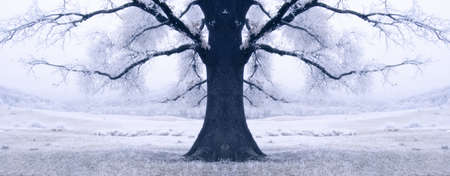 black tree surrounded by snow in winter  photo