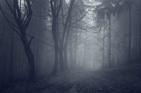 night in a dark forest with fantasy mood  photo