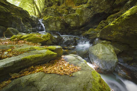 river and waterfall in a colourful forest in summer  photo