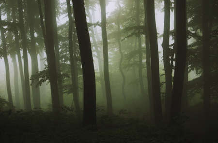 dark green forest Stock Photo - 13952780