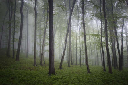 forest with fog and fantasy mood Stock Photo - 14124985