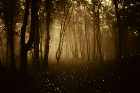 Dark forest with fog in autumn photo