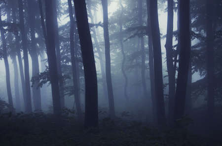 Dark forest with fog at night Stock Photo