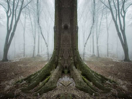 symmetrical tree in a frozen forest  photo