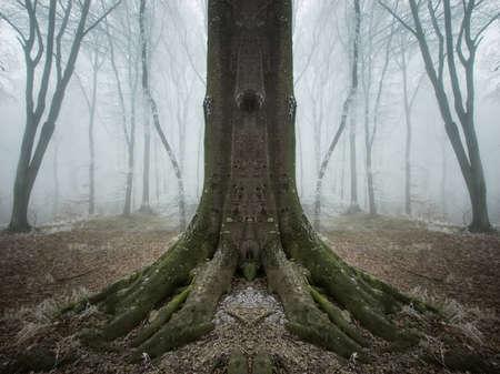 symmetrical tree in a frozen forest Stock Photo - 14124989