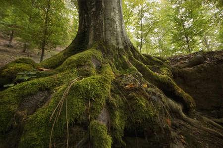 boom met mos op wortels in een groen bos