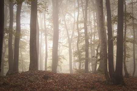 bright light in a forest on a summer day  Stock Photo - 14316562