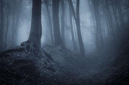 nacht in een donker bos met mist en zwarte bomen Stockfoto