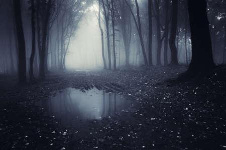 donker bos met vijver en bladeren op de grond