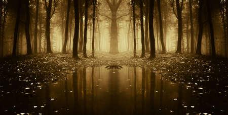 fantastyczny las jesieniÄ… z drzew, odzwierciedlajÄ…c w wodzie