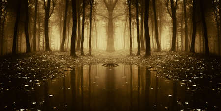 fantasy autumn forest with trees reflecting in water  Stock Photo