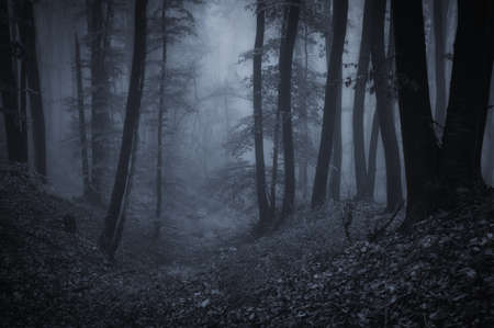 dark forest: dark night in a forest