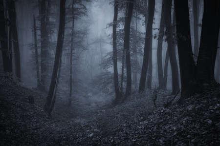 donkere nacht in een bos Stockfoto