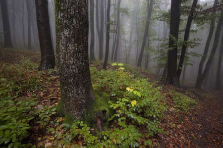 rainy summer day in a forest  photo