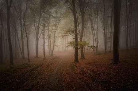 dark woods: dark woods in summer