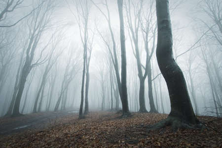 fog in forest with black trees  photo