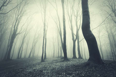 scary forest with black trees  photo
