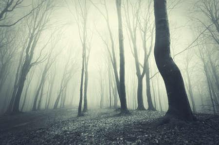 straszny las z czarnymi drzewami