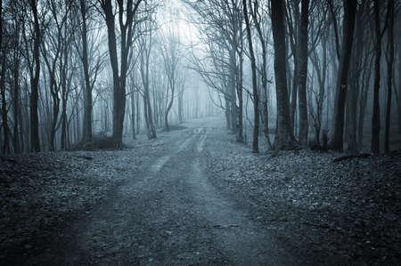 foresta: strada attraverso un bosco buio di notte