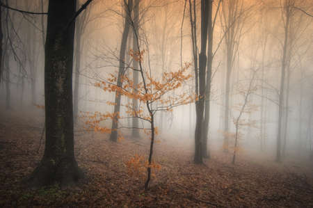 misty autumn forest with colorful tree Stock Photo - 14402731
