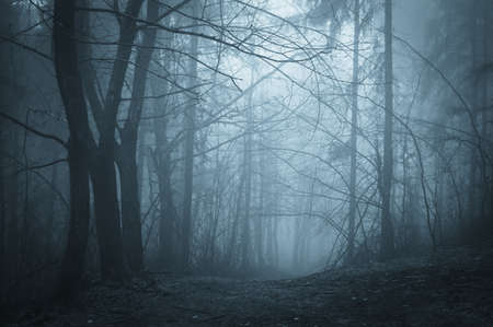 mystery man: dark path through a mysterious forest at night  Stock Photo