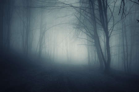 mystery woods: dark forest night landscape