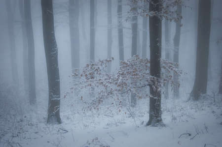 winter with fog in a forest with snow and a tree with orange leafs  photo
