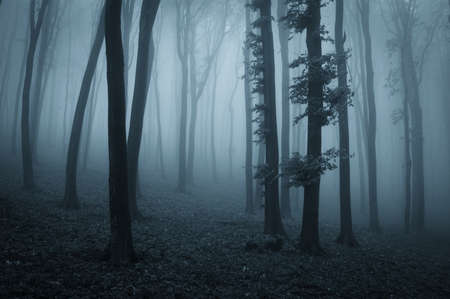 Donker bos 's nachts met zwarte bomen en blauw licht Stockfoto