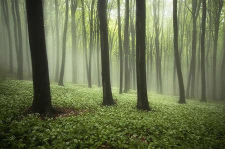 białe kwiaty na ziemi z zielonym lesie na wiosnę