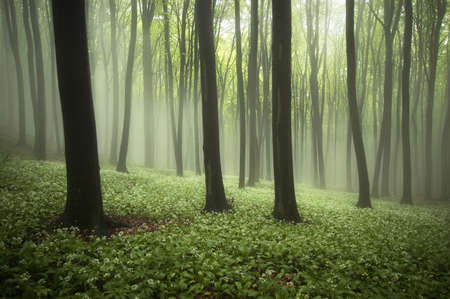 black and white forest: white flowers on the ground of a green forest in spring
