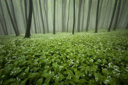 blooming forest with fog and flowers on the ground Stock Photo - 14510184