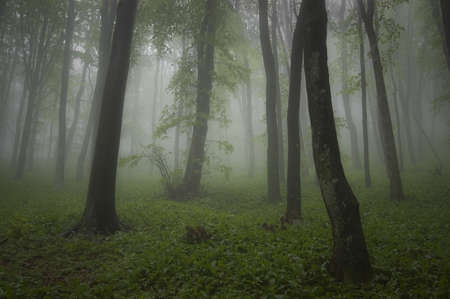 rainy weather in a green forest photo